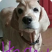 Adopt A Pet :: Harley - Macomb, IL