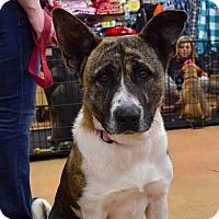 Adopt A Pet :: Rowena - Goldsboro, NC