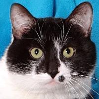 Adopt A Pet :: Max - Renfrew, PA