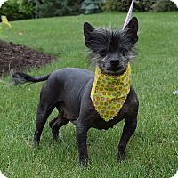 Adopt A Pet :: Penelope - Washington, PA