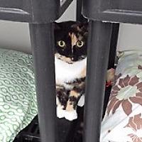 Adopt A Pet :: Blossom - Orillia, ON