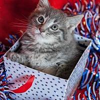 Adopt A Pet :: Clover III - Muskegon, MI