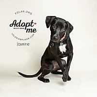 Adopt A Pet :: JASMINE - Linden, NJ