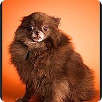 Adopt A Pet :: Mocha - Orange, CA