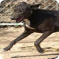 Adopt A Pet :: Sheena - Oakland, AR