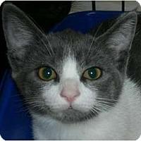 Adopt A Pet :: Kit - lake elsinore, CA