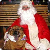 Adopt A Pet :: Margie - Scottsdale, AZ