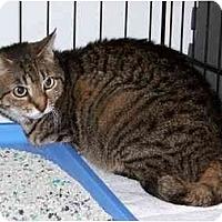 Adopt A Pet :: Mamacita - Syracuse, NY