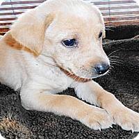 Adopt A Pet :: JANET - San Diego, CA