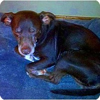 Adopt A Pet :: Charlie - Carmel, IN