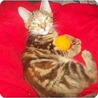 Adopt A Pet :: kayla - Little Neck, NY