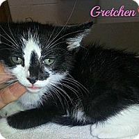 Adopt A Pet :: Gretchen - Jacksboro, TN