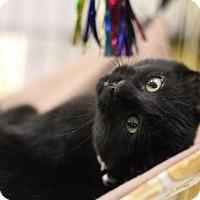 Adopt A Pet :: Boyd - Sacramento, CA