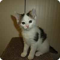 Adopt A Pet :: Stella& Molly - Clay, NY