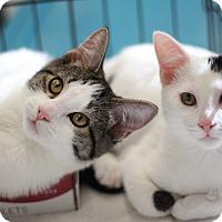 Adopt A Pet :: Rocky & Owen - Richmond, VA