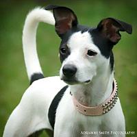 Adopt A Pet :: Kya - Fayetteville, GA