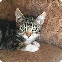 Adopt A Pet :: Gregory - Chula Vista, CA