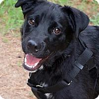 Adopt A Pet :: Derby - New City, NY