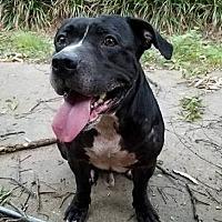 Adopt A Pet :: Seal - Harriman, TN