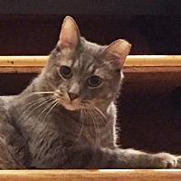 Adopt A Pet :: STONE&Louise-True Cuddler - New York, NY
