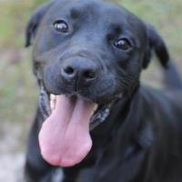 Adopt A Pet :: Abbieville (V22) - Covington, LA