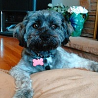 Adopt A Pet :: Pepper-Adoption Pending - Pleasanton, CA