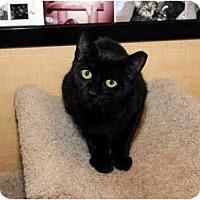 Adopt A Pet :: Bentley - Farmingdale, NY