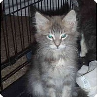 Adopt A Pet :: Hank - Davis, CA