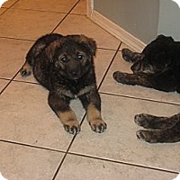 Adopt A Pet :: Hermione - Surrey, BC