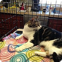 Adopt A Pet :: Sadie - Pace, FL