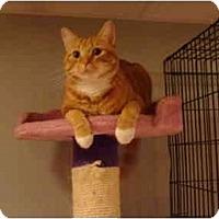 Adopt A Pet :: Jefferson-PETSMART - Muncie, IN