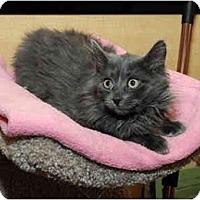 Adopt A Pet :: Merlin - Farmingdale, NY
