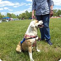 Adopt A Pet :: Dutchess - Scotland Neck, NC