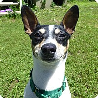 Adopt A Pet :: Digger - in Maine - kennebunkport, ME