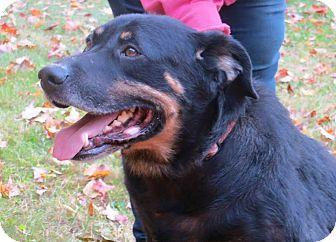 Rottweiler/German Shepherd Dog Mix Dog for adoption in SOUTHINGTON, Connecticut - Road Dog