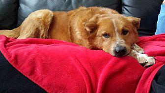 Shepherd (Unknown Type) Mix Dog for adoption in Midlothian, Virginia - Harley