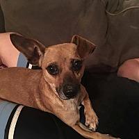 Adopt A Pet :: Pablo - Pottstown, PA