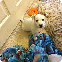 Adopt A Pet :: Tiffany - Hohenwald, TN