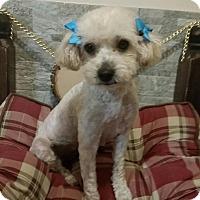 Adopt A Pet :: Mitzi - Brea, CA