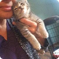 Adopt A Pet :: Mindy - Chicago, IL