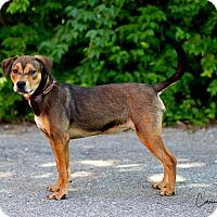 Adopt A Pet :: Betsy - Cape Girardeau, MO