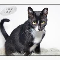 Adopt A Pet :: JJ - New Smyrna Beach, FL
