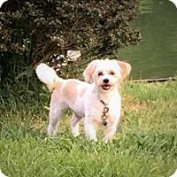 Adopt A Pet :: MEEKO - Coeburn, VA