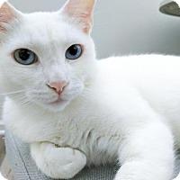 Adopt A Pet :: Chanel - Oakland, CA