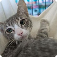 Adopt A Pet :: Nancy - Redwood City, CA