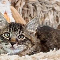 Adopt A Pet :: Joplin - Boise, ID