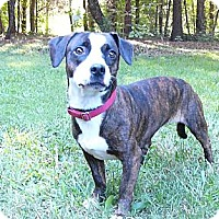 Adopt A Pet :: Hobo - Mocksville, NC