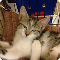 Adopt A Pet :: Macey - Fort Lauderdale, FL
