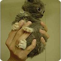 Adopt A Pet :: JC-05-4-2 - Davis, CA