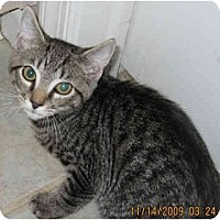 Adopt A Pet :: Ace - Catasauqua, PA
